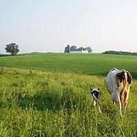 Pleasant ridge pasture